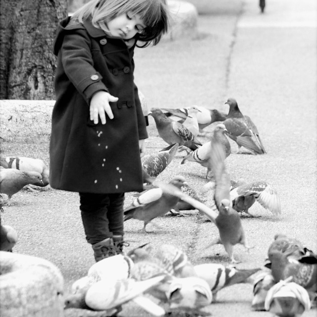 """Child and birds"" stock image"
