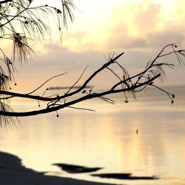 """Beach dawn"" stock image"