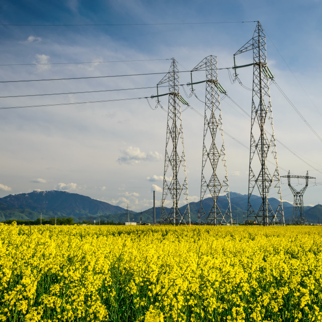 """""""Colza field and powerline electricity"""" stock image"""