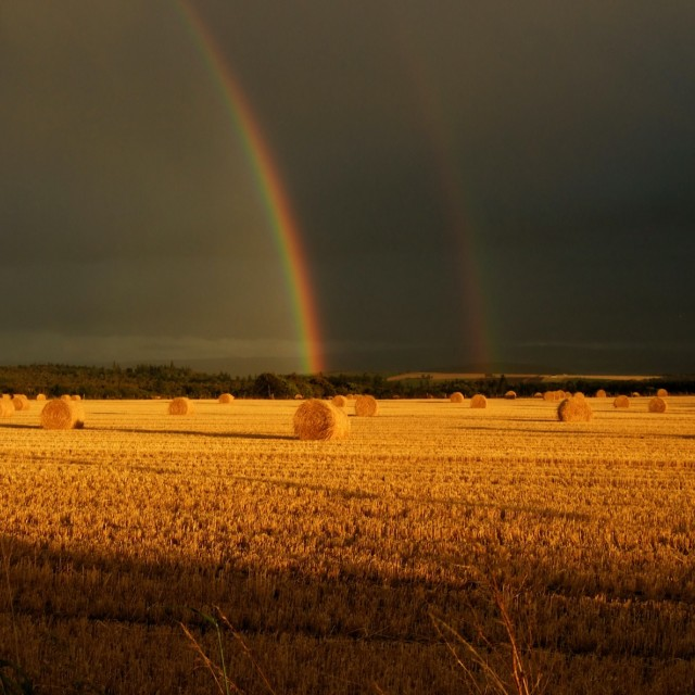 """Double rainbow at harvest"" stock image"