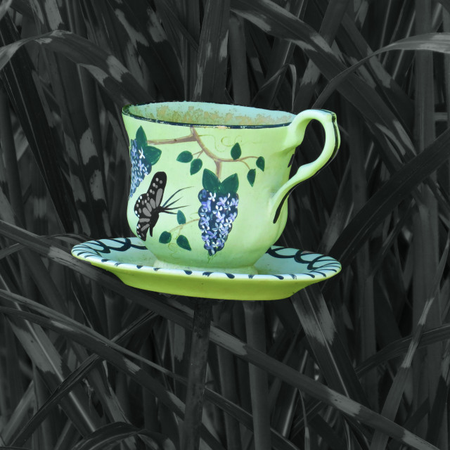 """Teacup Garden"" stock image"