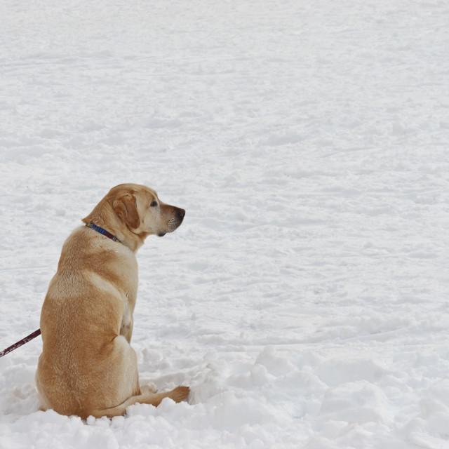 """""""Dog Waiting"""" stock image"""