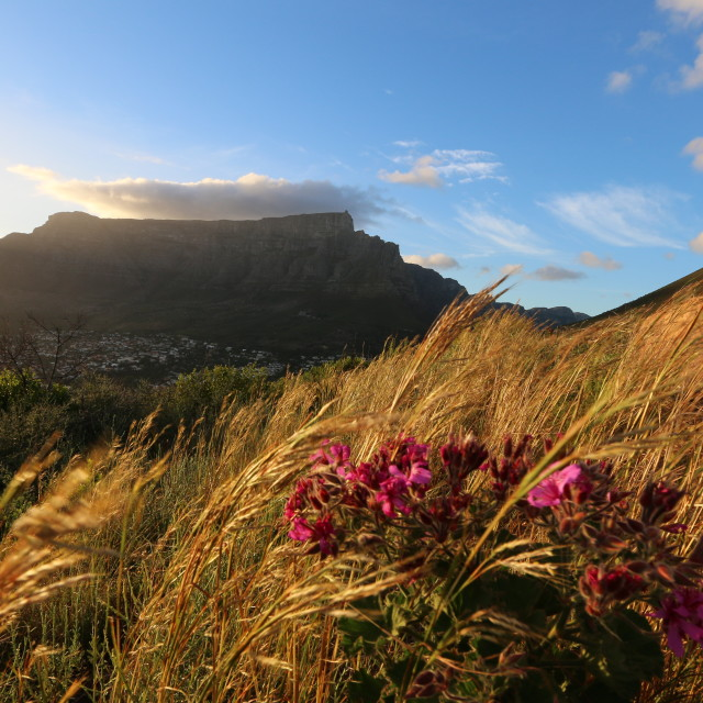 """Table Mountain at sunrise"" stock image"