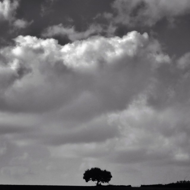 """British landscape single tree against a cloudy sky."" stock image"