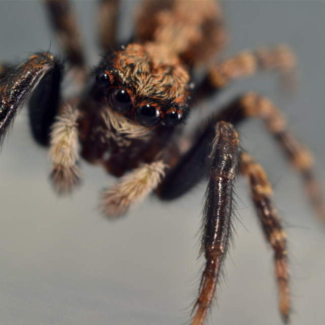 """""""Along came a spider..."""" stock image"""