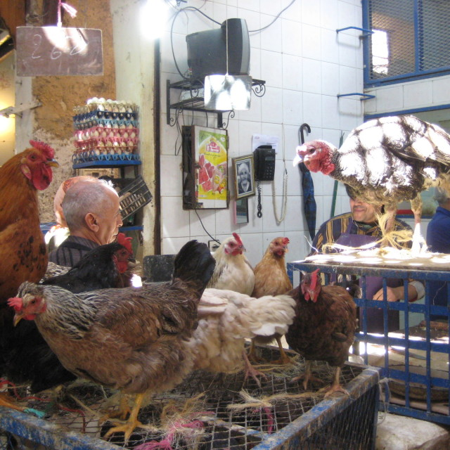 """Poultry shop"" stock image"