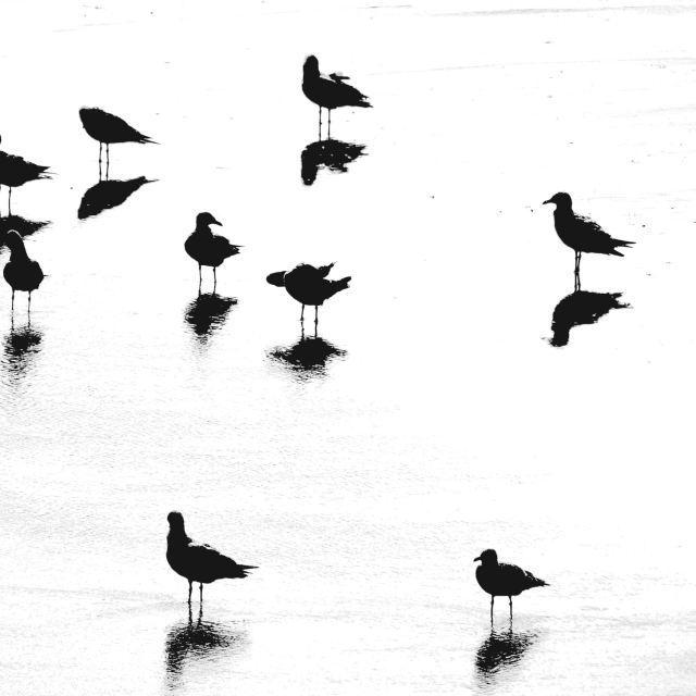 """""""Gulls on Towan."""" stock image"""