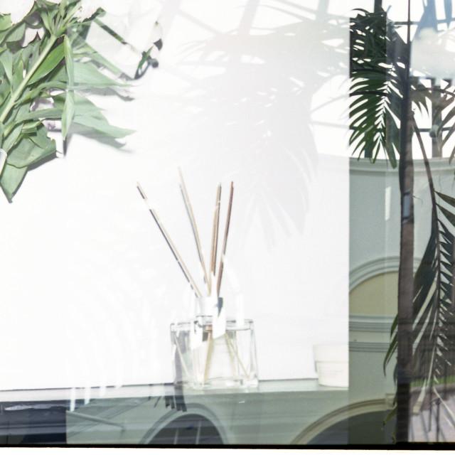 """Flowers & Tree"" stock image"