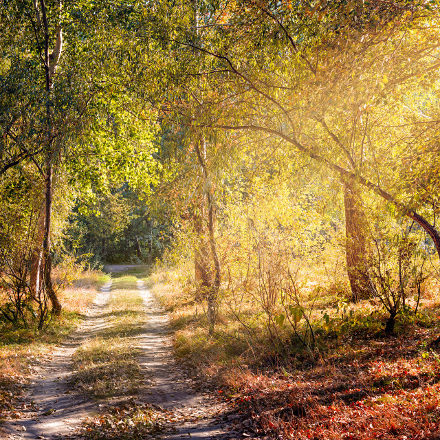 """""""Sun Ray in the Autumn Forest"""" stock image"""