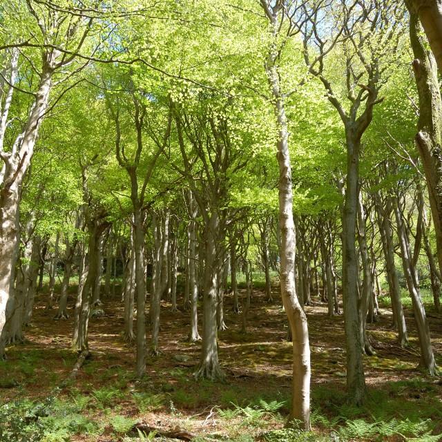 """Woodland sunlight"" stock image"