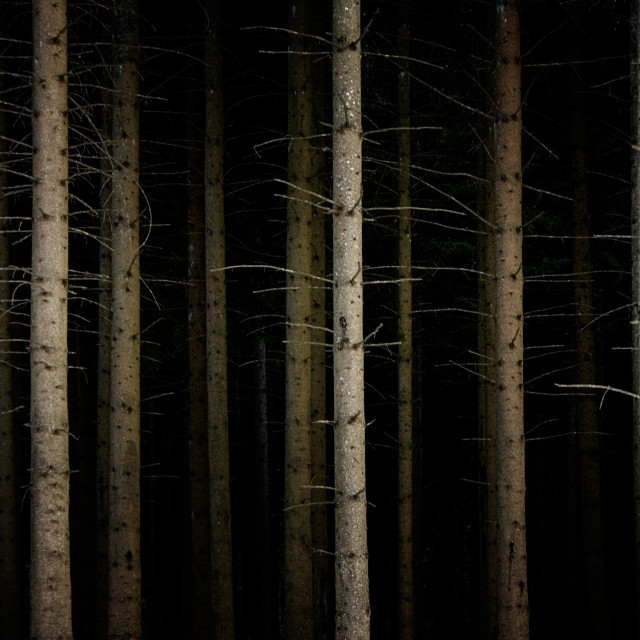 """Deep Dark Forest"" stock image"