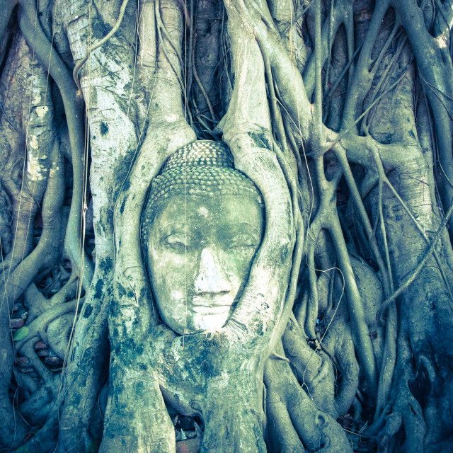 """Face in roots"" stock image"