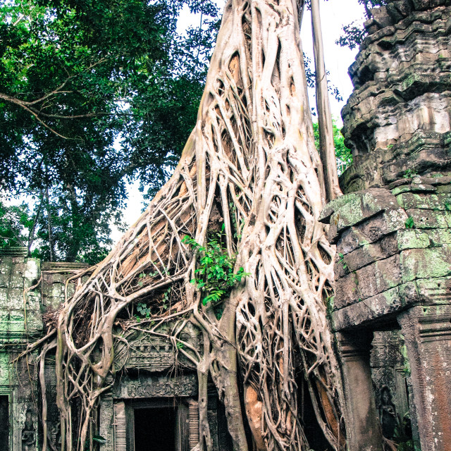 """""""Temple with ingrowing roots"""" stock image"""