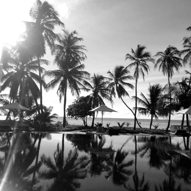 """""""Palm tree reflections at Maldivian resort"""" stock image"""