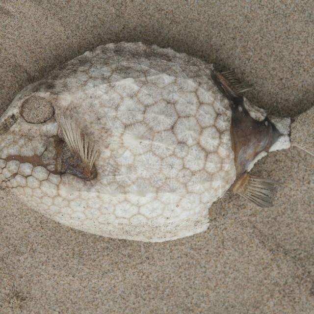 """Dead fish on sand"" stock image"