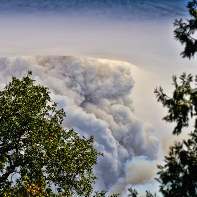 """Forest Fire Smoke"" stock image"