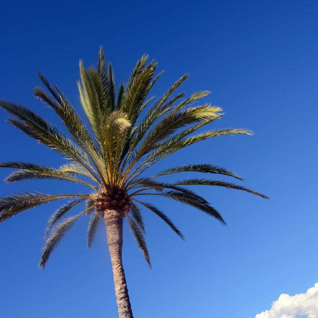 """Palm top blue sky"" stock image"