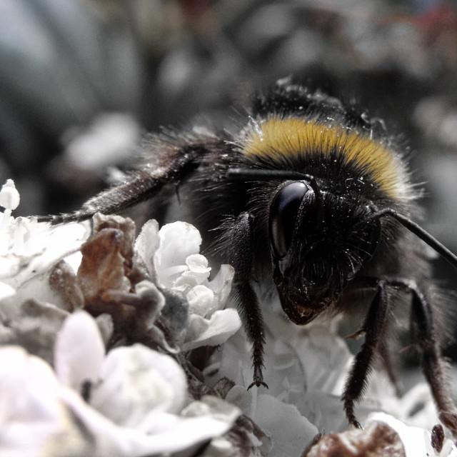 """Mr Bee"" stock image"