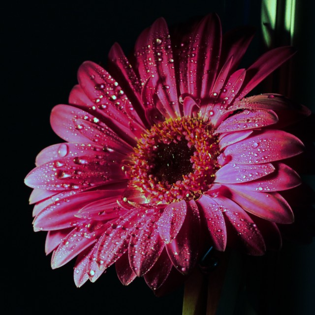 """pink art flower"" stock image"
