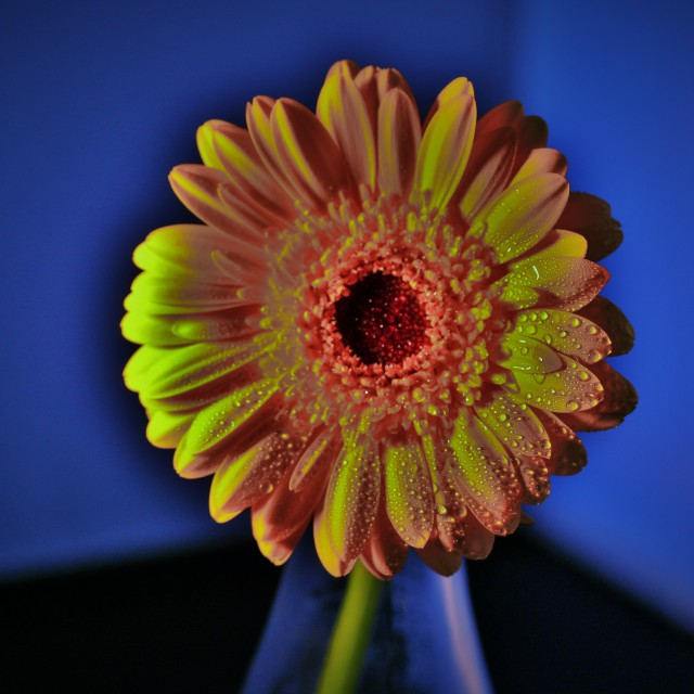 """pop art flower"" stock image"