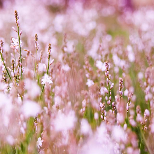"""Spring"" stock image"