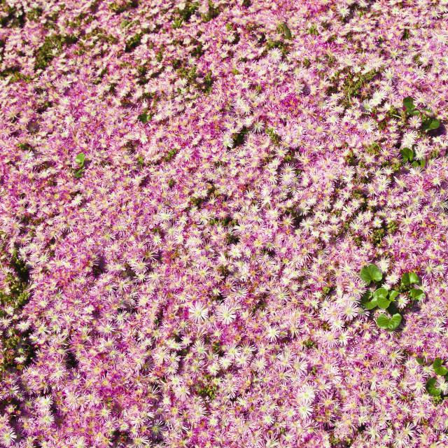 """""""Flower carpet"""" stock image"""