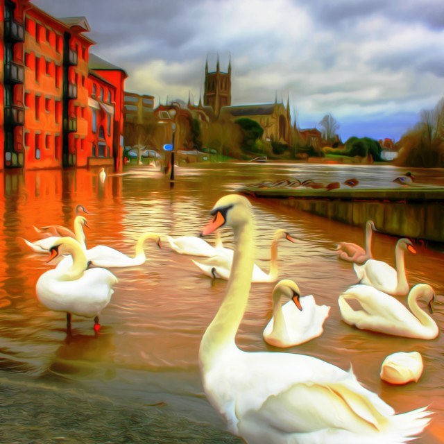 """""""Swans On Flooded Worcester Quayside"""" stock image"""