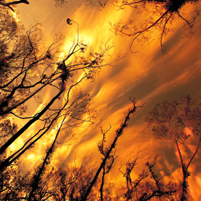"""""""Burning Forrest."""" stock image"""