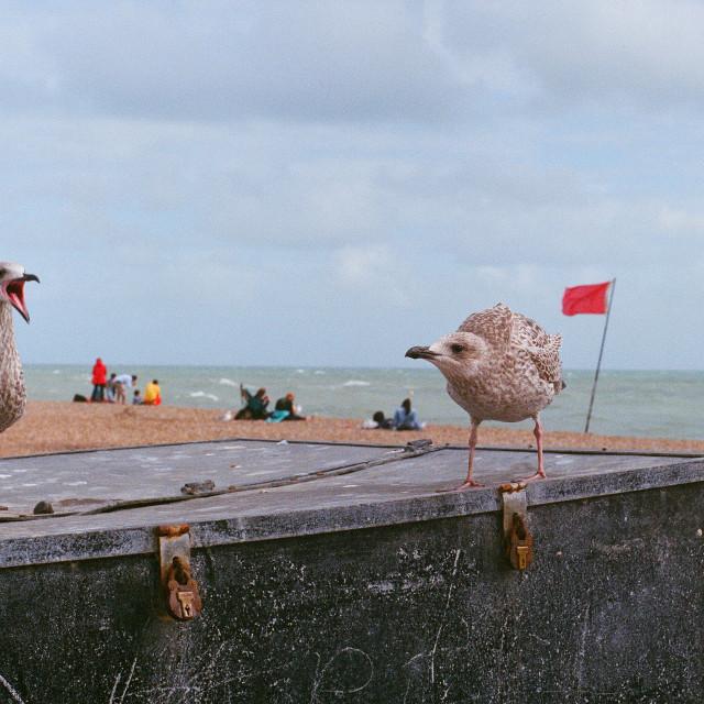 """Brighton Gulls"" stock image"
