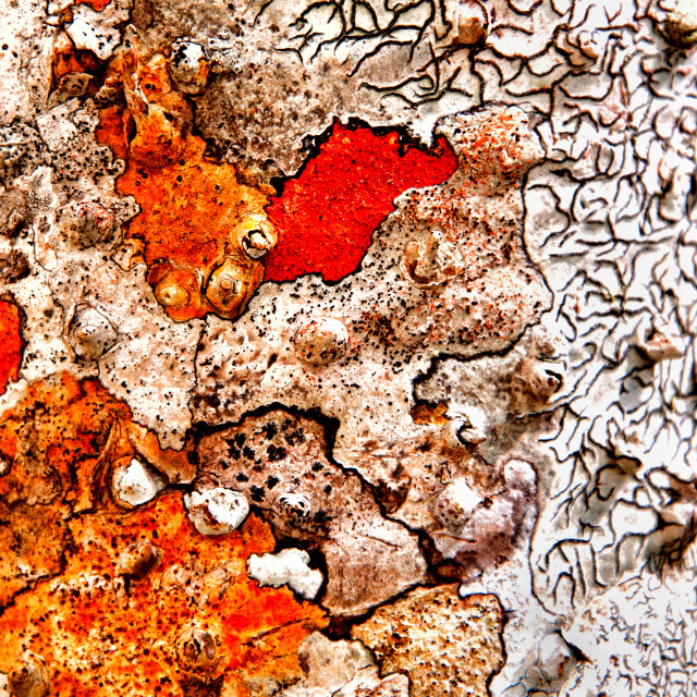 """TREE BARK"" stock image"