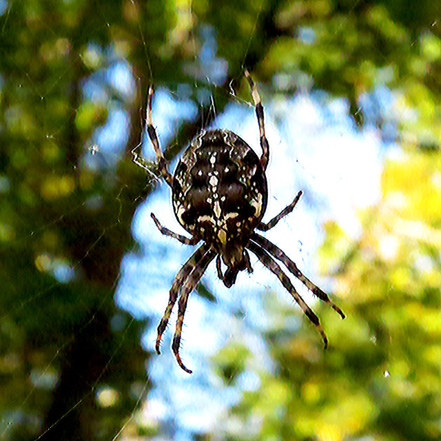 """Spider Sky"" stock image"