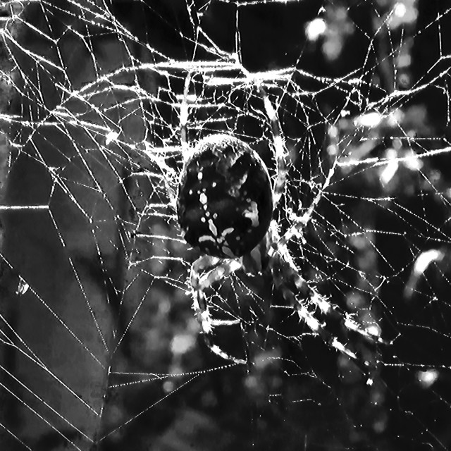 """Spider Silk"" stock image"
