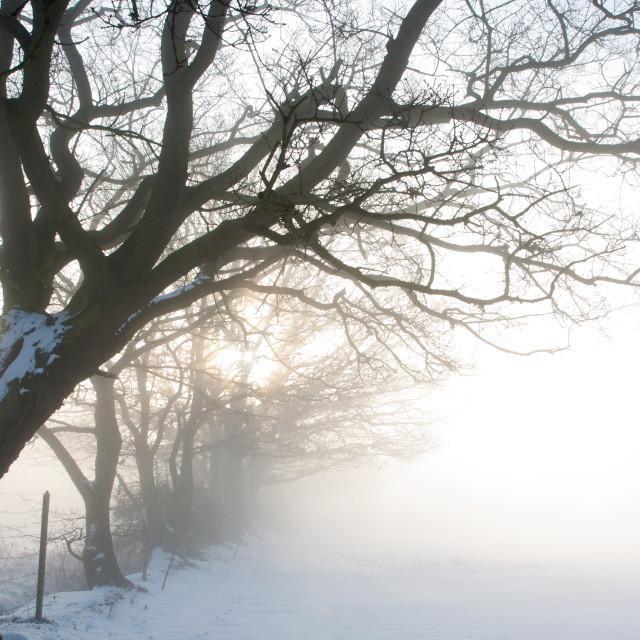 """Misty Dawn over Snowy Field"" stock image"