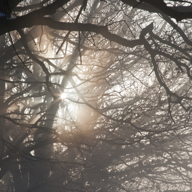 """Winter Mist through Trees"" stock image"