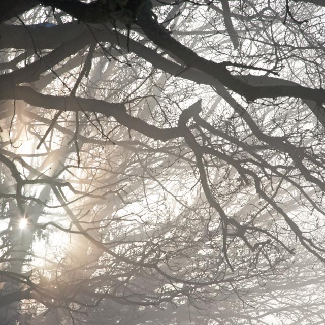 """Winter Mist through Trees"" stock image"