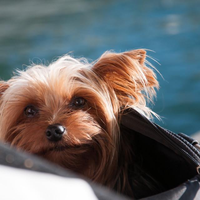 """""""Sunshine dog"""" stock image"""