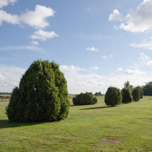 """Common juniper plain field"" stock image"