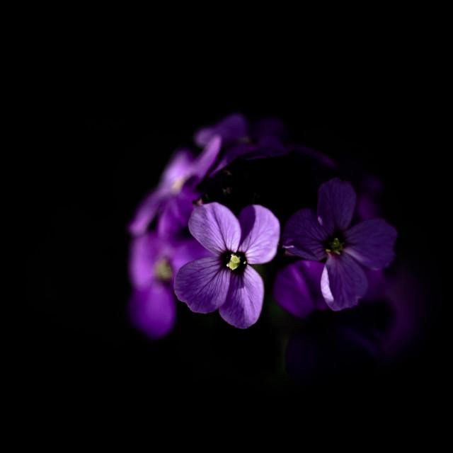 """Purple"" stock image"