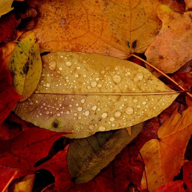 """Autumn Colors ..."" stock image"