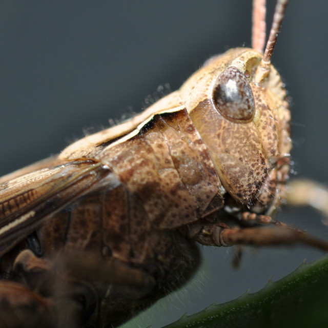 """Grasshopper4"" stock image"