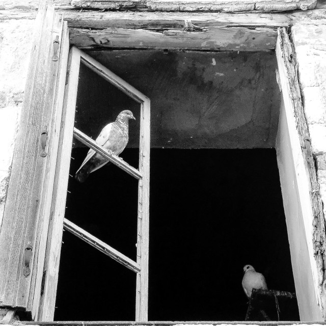 """""""Pigeon in a window"""" stock image"""