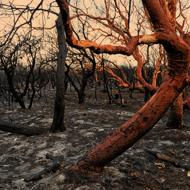 """Burnt Forrest."" stock image"