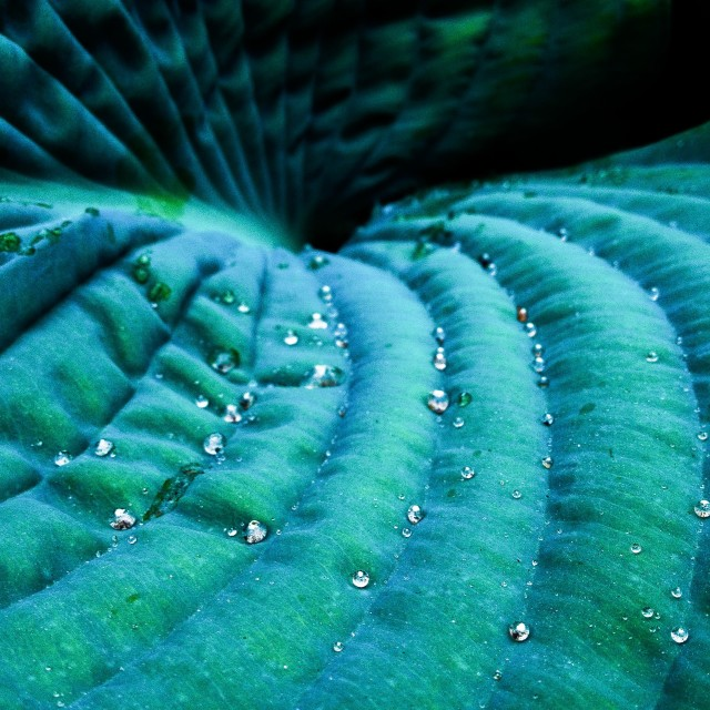 """Closeup of water drops on a leaf"" stock image"