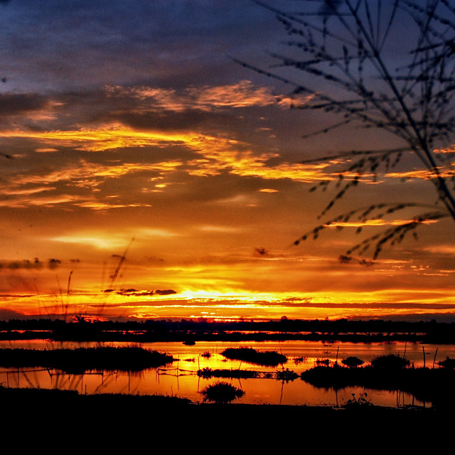 """field of sunset"" stock image"