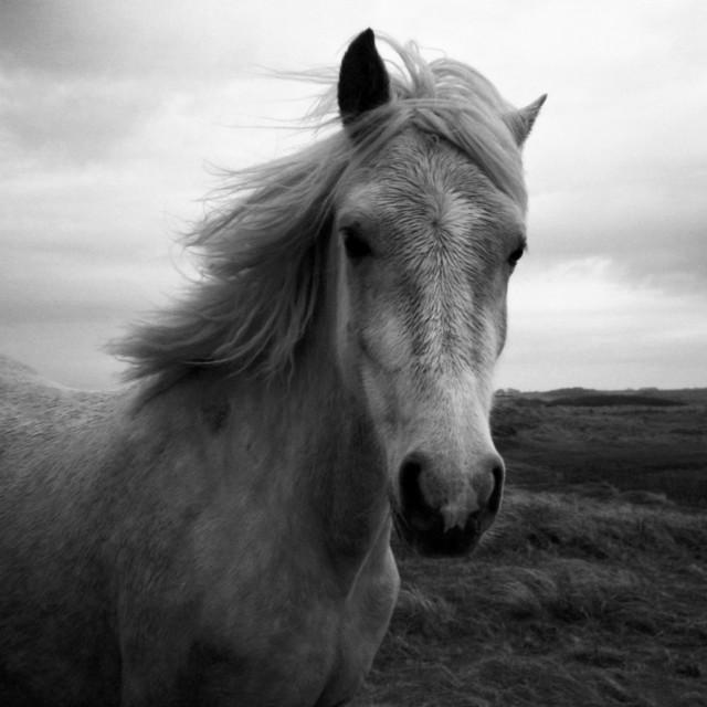 """""""White Horse"""" stock image"""