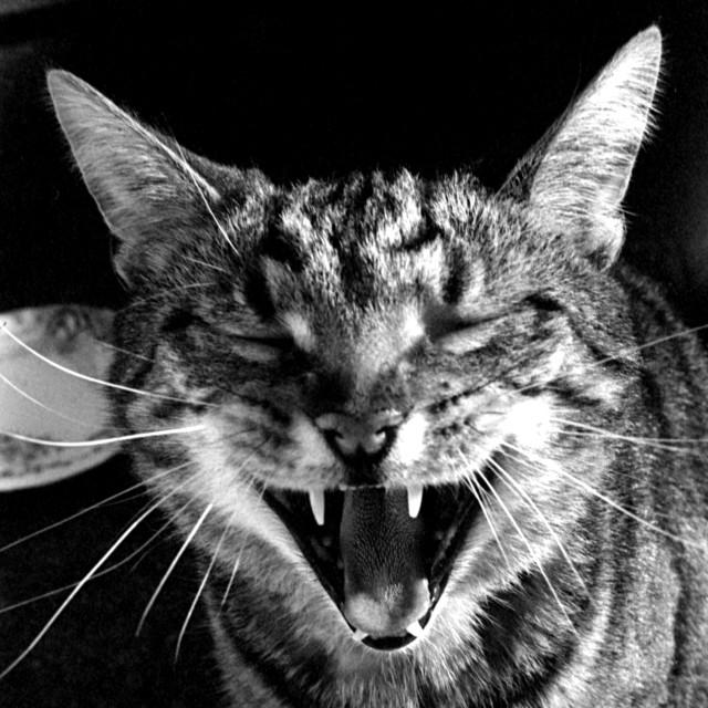 """""""Yawn"""" stock image"""
