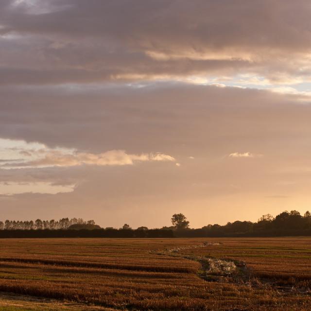 """Stubble Field at Sunset"" stock image"