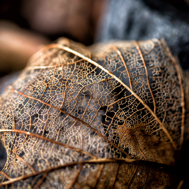 """Rotted leaves"" stock image"