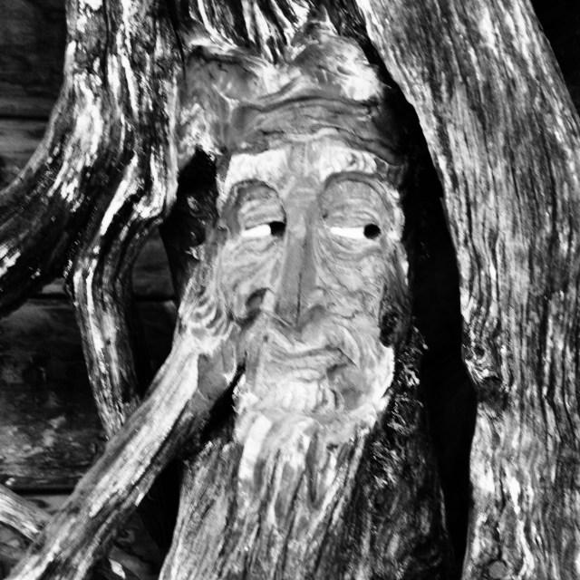 """""""Woodface"""" stock image"""