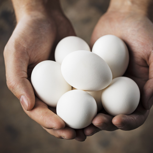 """Fresh eggs"" stock image"